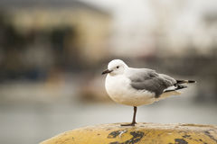 Pájaro en un pie Fotografía de archivo libre de regalías