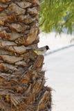 Pájaro en un tronco de la palma Foto de archivo