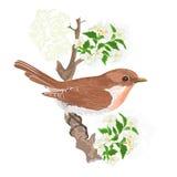 Pájaro en un vector del jazmín de la ramita Imagen de archivo libre de regalías