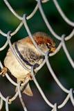 Pájaro en una célula Fotografía de archivo libre de regalías