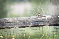 Pájaro en una cerca Imágenes de archivo libres de regalías