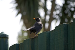 Pájaro en una cerca Imagen de archivo libre de regalías