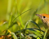 Pájaro en una hierba verde entre el sol y la naturaleza Fotos de archivo