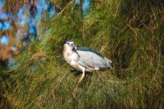Pájaro en una rama Foto de archivo libre de regalías