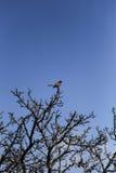 Pájaro en una rama Fotografía de archivo