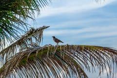 Pájaro en una rama Imagenes de archivo
