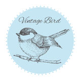 Pájaro en una rama con las flores pintadas a mano tarjeta del vintage con un pájaro Ilustración del vector Imagenes de archivo