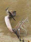 Pájaro en una rama de la palma Fotografía de archivo