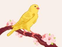 Pájaro en una ramificación Fotos de archivo libres de regalías