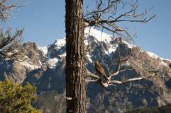 Pájaro en una ramificación de árbol Imagen de archivo