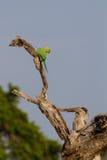 Pájaro en Yala Fotos de archivo