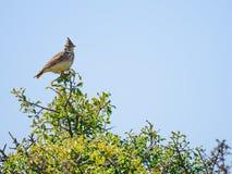 Pájaro encima del bosque Imagen de archivo libre de regalías