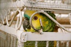 Pájaro enjaulado Foto de archivo