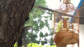 Pájaro enjaulado para la venta en jaula en las calles del viejo cuarto del capital, Hanoi, Vietnam de la canción