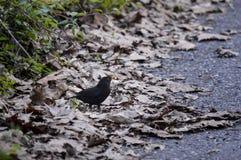 pájaro entre las hojas marrones Imágenes de archivo libres de regalías