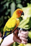 Pájaro exótico Fotos de archivo libres de regalías