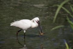 Pájaro exótico Imágenes de archivo libres de regalías