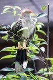 Pájaro exótico Fotos de archivo