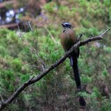 Pájaro exótico en rama foto de archivo libre de regalías