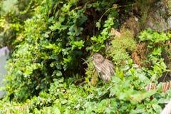 Pájaro exótico entre las hojas Imagenes de archivo