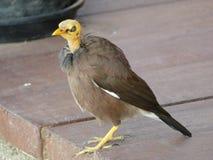Pájaro feo Imágenes de archivo libres de regalías
