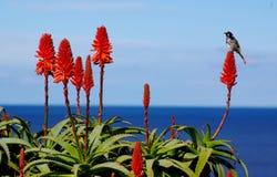 Pájaro, flor y océano Fotografía de archivo libre de regalías