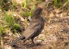 Pájaro fuerte Imagen de archivo libre de regalías