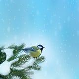 Pájaro (gran titmouse) en invierno Imagen de archivo