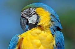 Pájaro hermoso. Foto de archivo