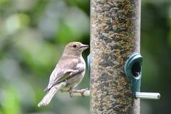 Pájaro hermoso fotos de archivo libres de regalías