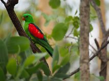 Pájaro hermoso Foto de archivo