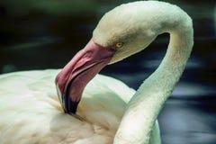 Pájaro hermoso Imagenes de archivo