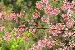 Pájaro hermoso Imagen de archivo