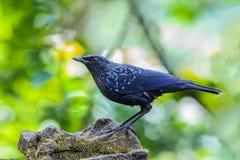 Pájaro hermoso Fotografía de archivo libre de regalías