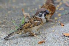 Pájaro hermoso Imagen de archivo libre de regalías