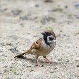 Pájaro hermoso Imágenes de archivo libres de regalías