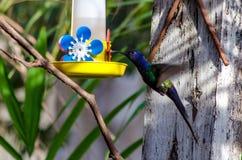 Pájaro hermoso Fotos de archivo