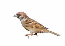 Pájaro hermoso aislado Imagen de archivo libre de regalías