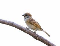 Pájaro hermoso aislado Imágenes de archivo libres de regalías