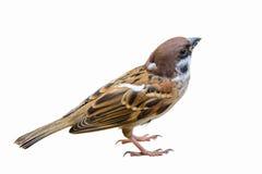 Pájaro hermoso aislado Fotos de archivo