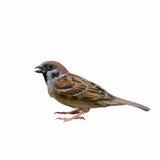 Pájaro hermoso aislado Fotografía de archivo libre de regalías