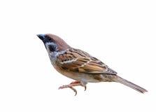 Pájaro hermoso aislado Foto de archivo libre de regalías