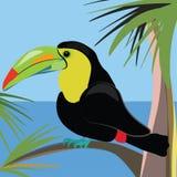 Pájaro hermoso del tucán que se sienta en una palmera Imágenes de archivo libres de regalías