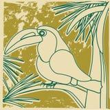 Pájaro hermoso del tucán que se sienta en una palmera Imagen de archivo