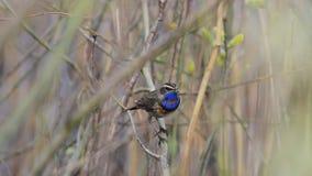 Pájaro hermoso en el arbusto almacen de metraje de vídeo