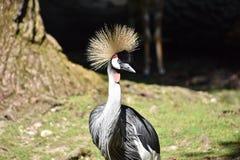 Pájaro hermoso en el parque zoológico del hellabrunn, Munich imagenes de archivo