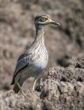 Pájaro hermoso en prado Foto de archivo