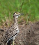 Pájaro hermoso en prado Foto de archivo libre de regalías