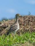 Pájaro hermoso en prado Imagen de archivo libre de regalías