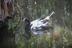 Pájaro hermoso en un agua imágenes de archivo libres de regalías